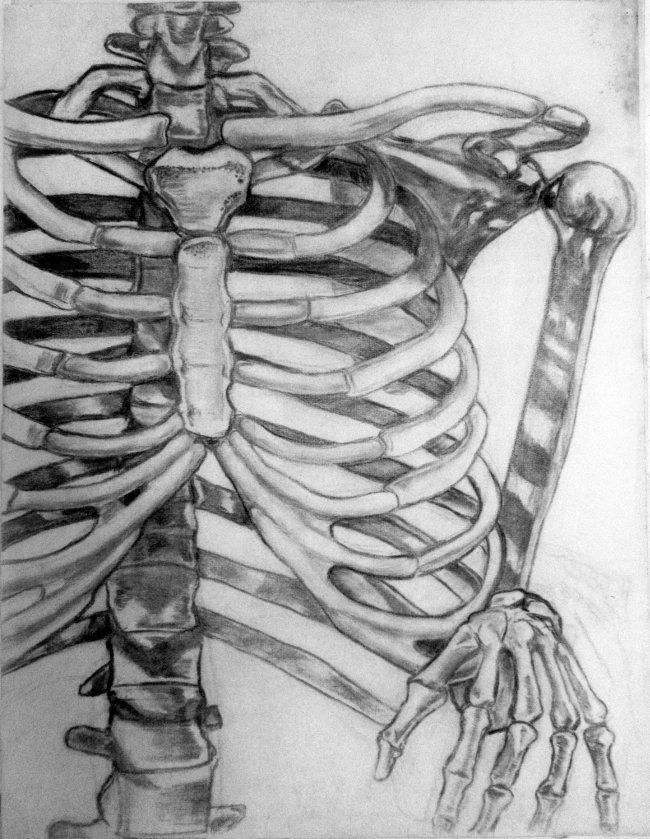 life_drawing_skeleton_650w