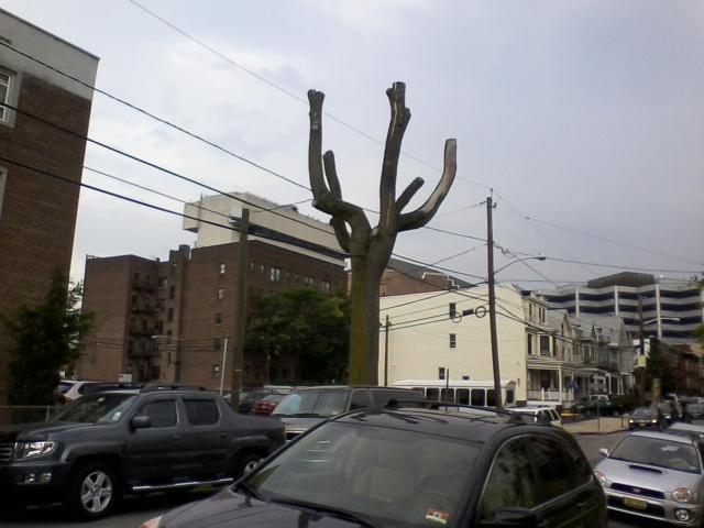 cactuslike_tree
