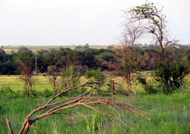 bent_trees_autoleveled_cropped650w