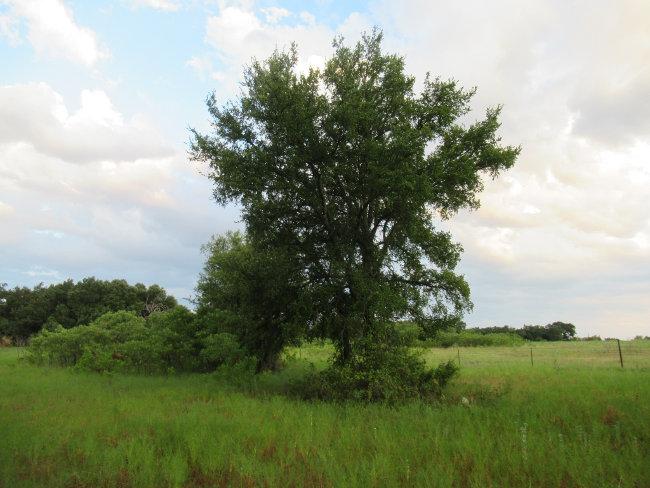 tree5_650w