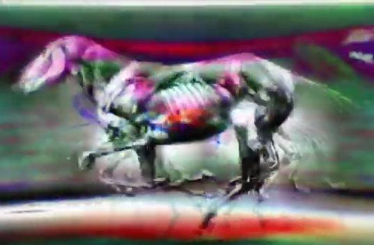 tommoody-1545425709508-seacrestcheadle_horse