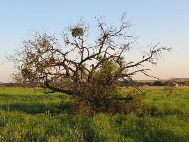tree3_650w