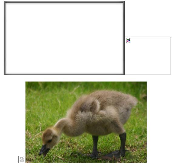 frames_gosling