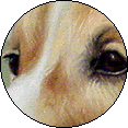 dogeyepog-copy