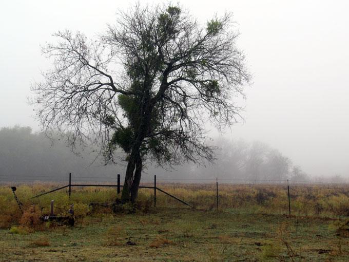 mist - mistletoe