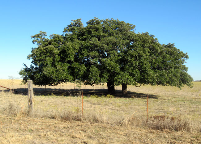 two trees (2)